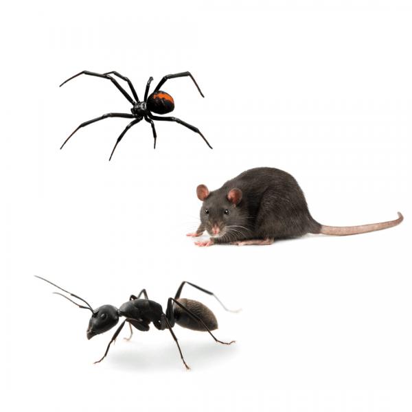 spider rats ants pest control